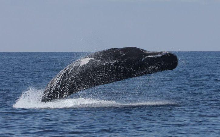 Costa se joint à Whalesafe pour la protection de l'environnement marin.